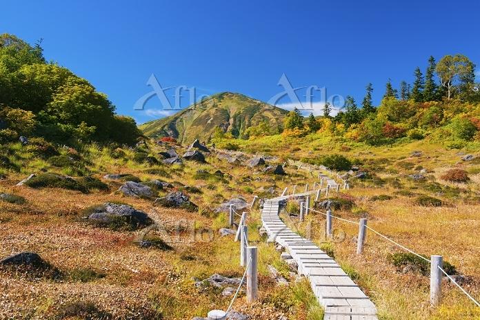 新潟県 紅葉の登山道と火打山 天狗ノ庭付近より撮影