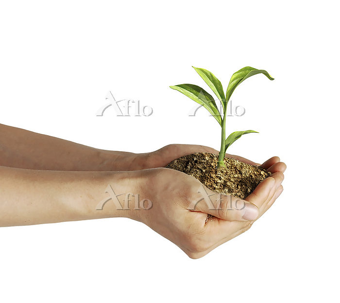 Man's hands holding soil with ・・・