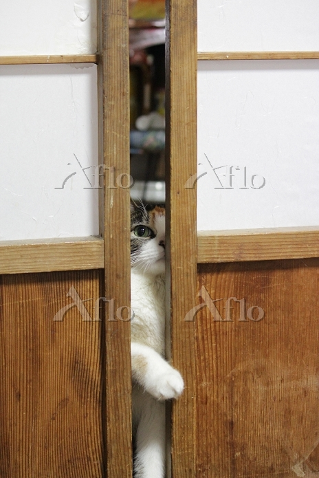 障子を開ける猫