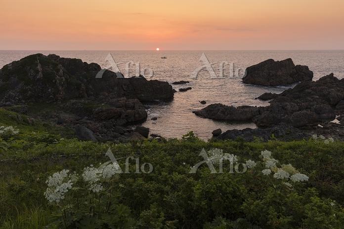 青森県 エゾノシシウド咲く種差海岸と朝日