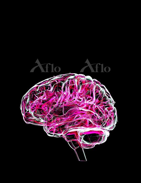 頭 賢い 健康