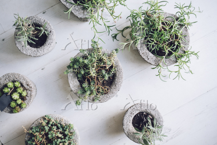Overhead view of potted plants・・・