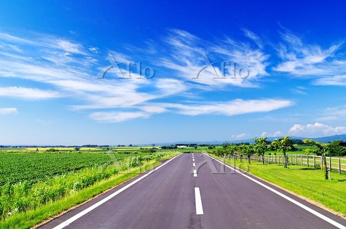 北海道 夏の丘の道路