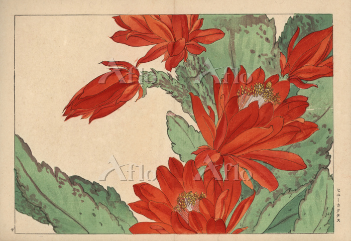 谷上広南「西洋草花図譜」