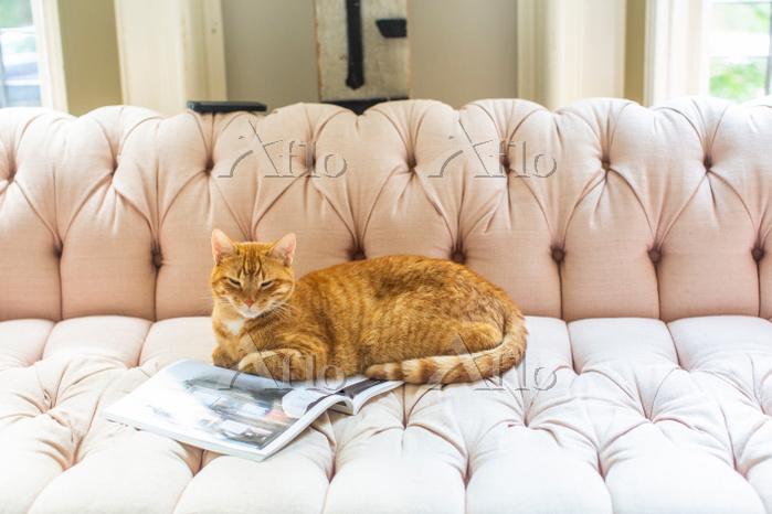 Ginger cat lying on stylish so・・・