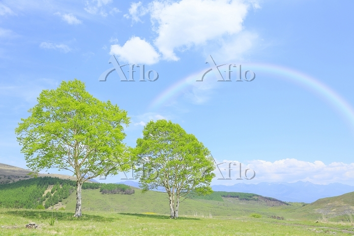 長野県 霧ヶ峰高原 新緑の木と青空に架かる虹
