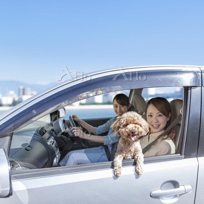 ドライブをする女性とトイプードル