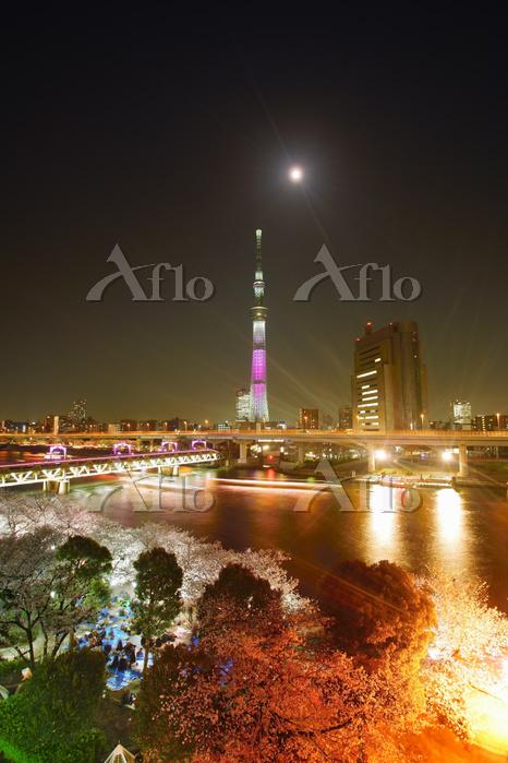 東京都 台東区 隅田公園の夜桜とスカイツリー