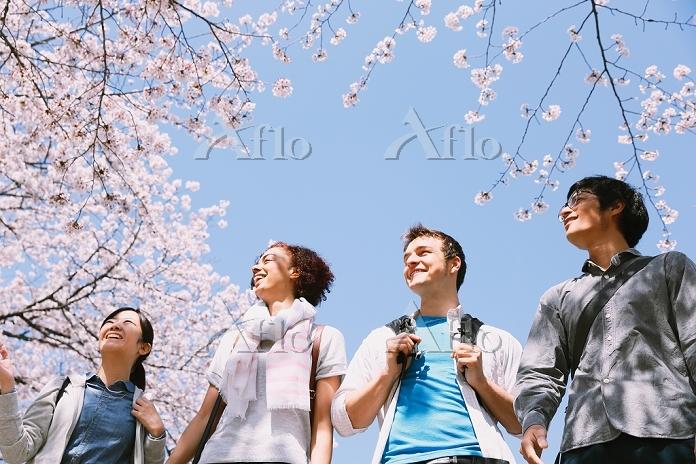 お花見する日本人と外国人