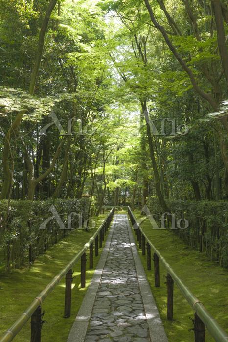 京都府 高桐院(大徳寺塔頭) 新緑の参道