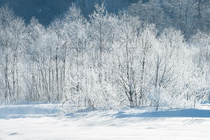 長野県 白馬村 松川の霧氷