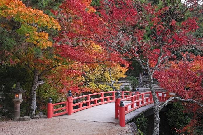 宮島の紅葉谷公園ともみじ橋の紅葉