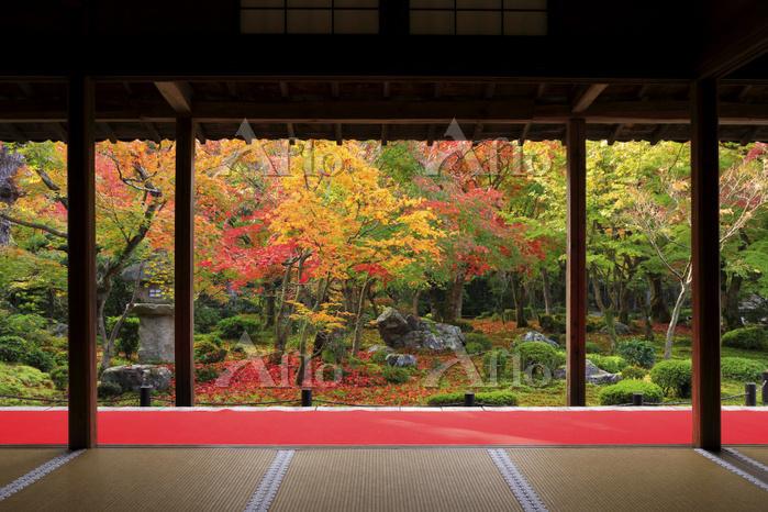 京都府 圓光寺 本堂から見る十牛之庭の紅葉