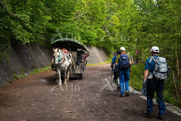 富士山 吉田ルート5合目から6合目へ向かう馬車と下山者