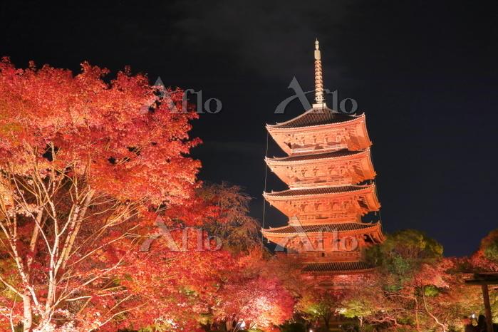 京都府 紅葉の東寺のライトアップ