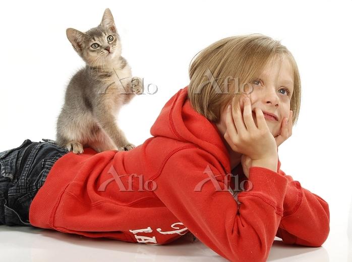Domestic Cat. Kitten sitting o・・・