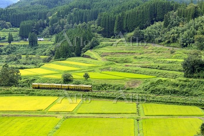 大分県 久大本線 「或る列車」