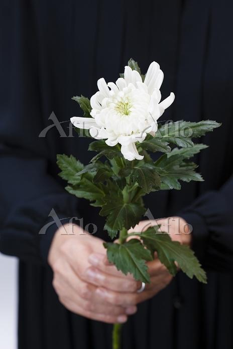 菊の花を持つ女性