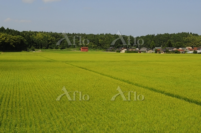 加賀の田園風景