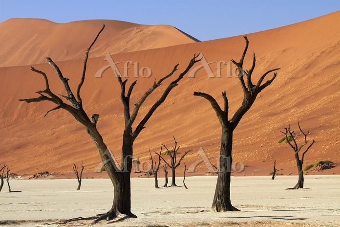 ナミビア ナミブ・ナウクルフト国立公園