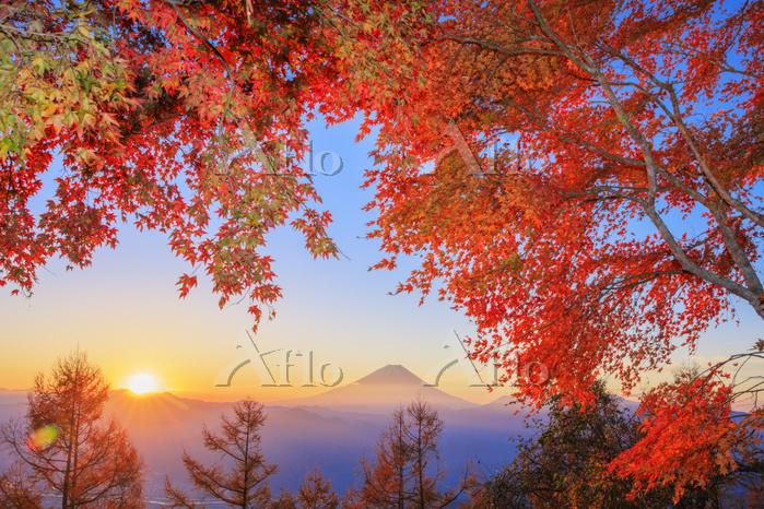 日本 山梨県 櫛形山林道より紅葉と富士山と朝日