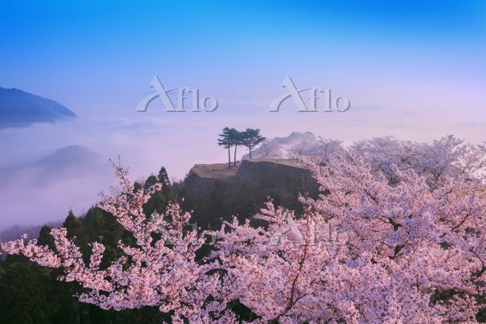 兵庫県 竹田城の桜と雲海
