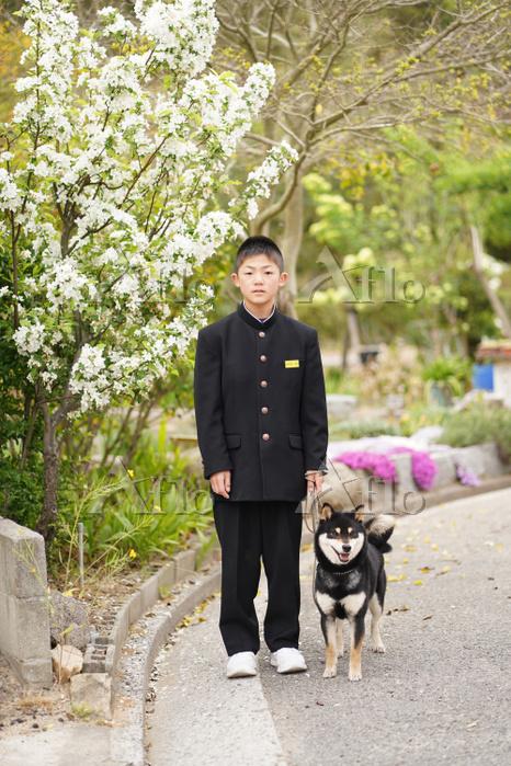 男子中学生と柴犬
