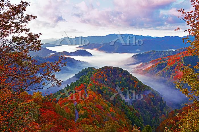 滋賀県 高島市 錦秋のおにゅう峠からの雲海 朝焼け