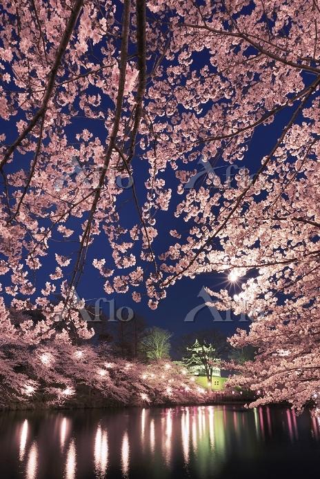 新潟県 高田公園の桜