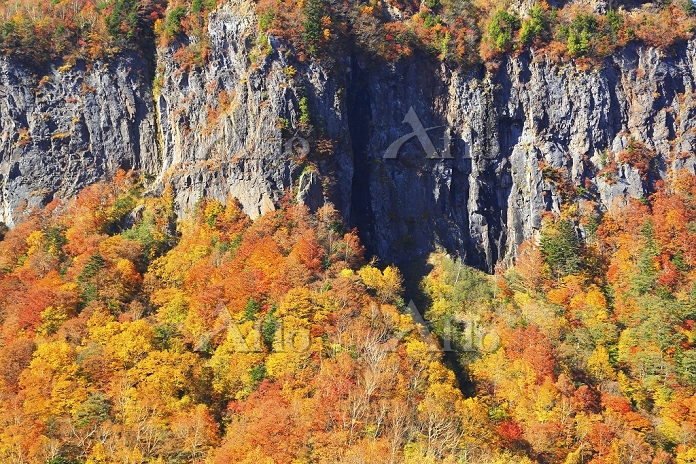 長野県 紅葉の樹林と絶壁