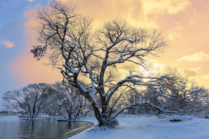 滋賀県 琵琶湖と朝日