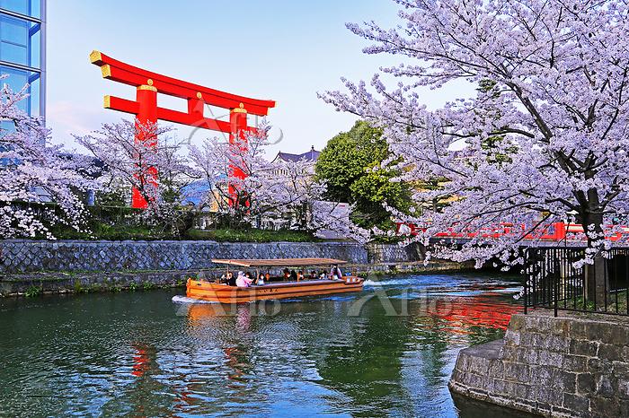 京都府 京都市  岡崎疎水の桜  十石舟めぐり