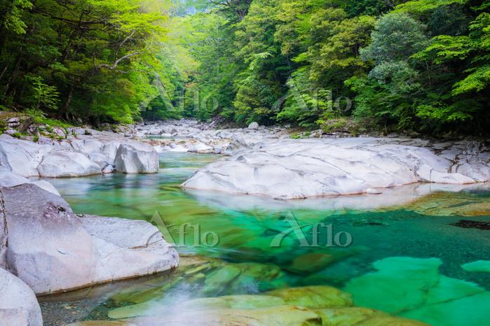 愛媛県 新緑の面河渓