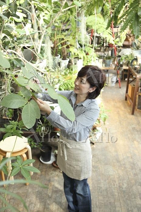 グリーンショップで働くミドル日本人女性