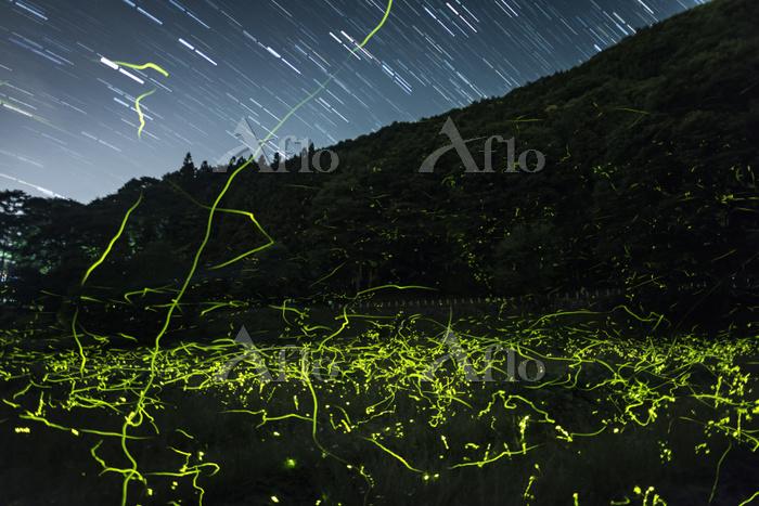 長野県 ホタルの光跡と星空