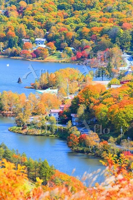 長野県 霧ヶ峰高原 ビーナスラインから望む紅葉の白樺湖