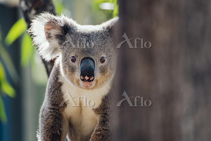 Australia, Queensland, portrai・・・