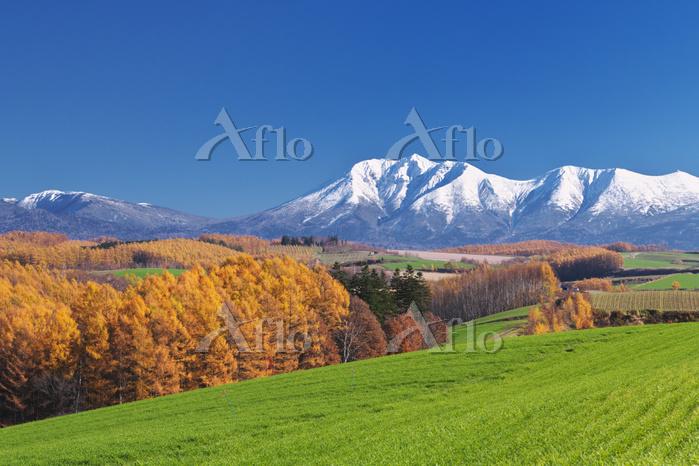 北海道 十勝岳連峰とカラマツ林の秋