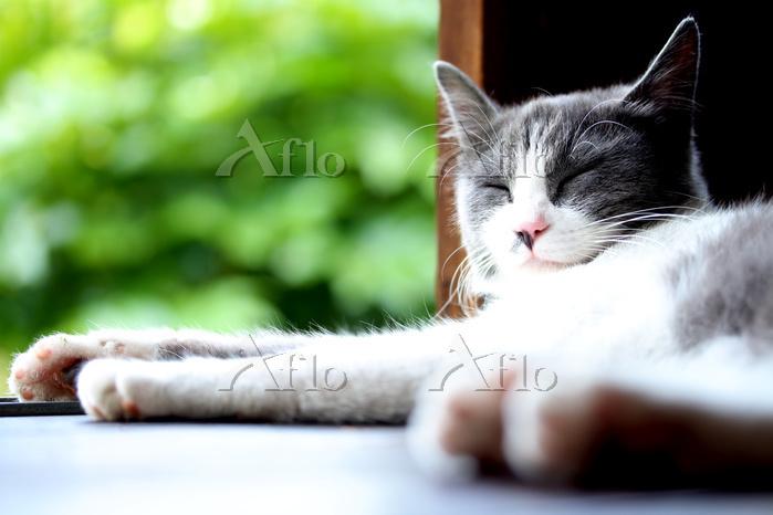 縁側で寝そべる猫