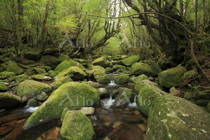 苔の岩と清流