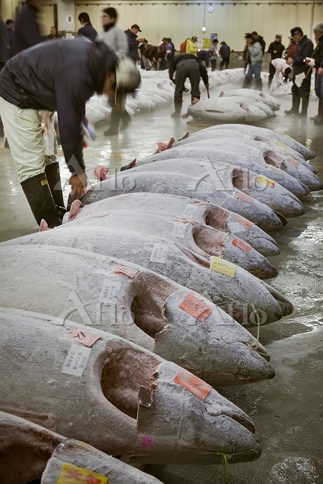 東京都 築地の魚市場