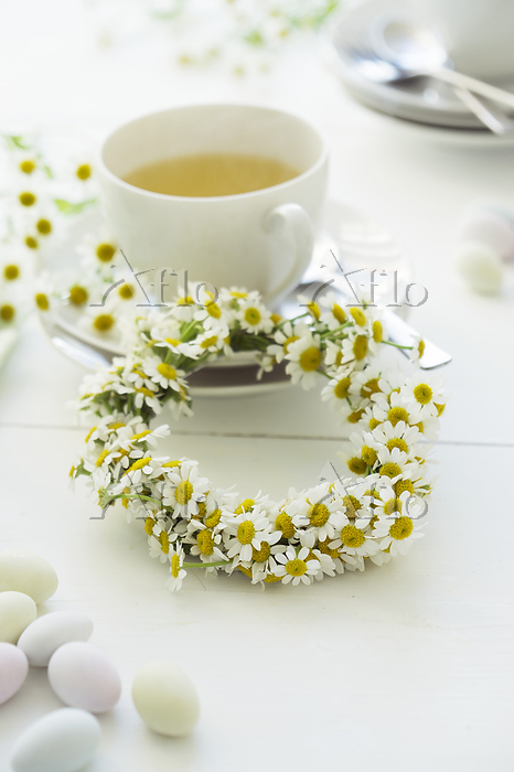 Camomile flowers with a teacup・・・