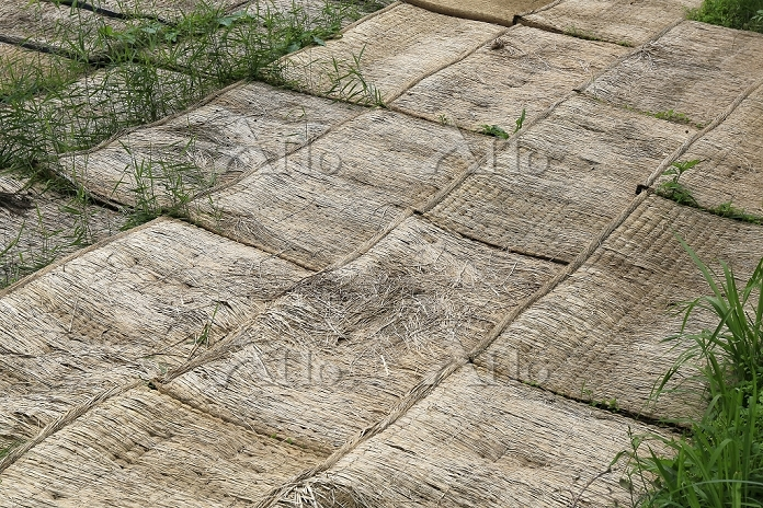 雑草防止の古畳