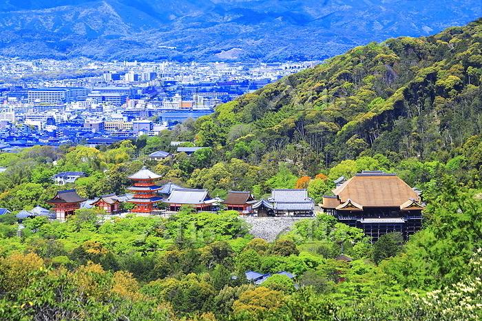 京都府 京都市 新緑の清水寺