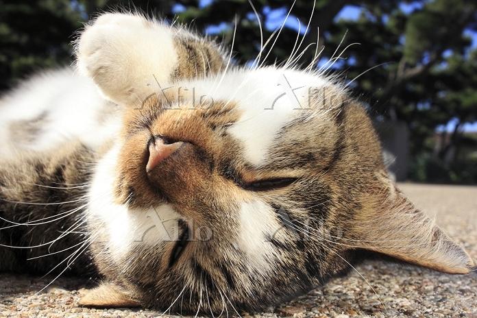 三崎町の猫