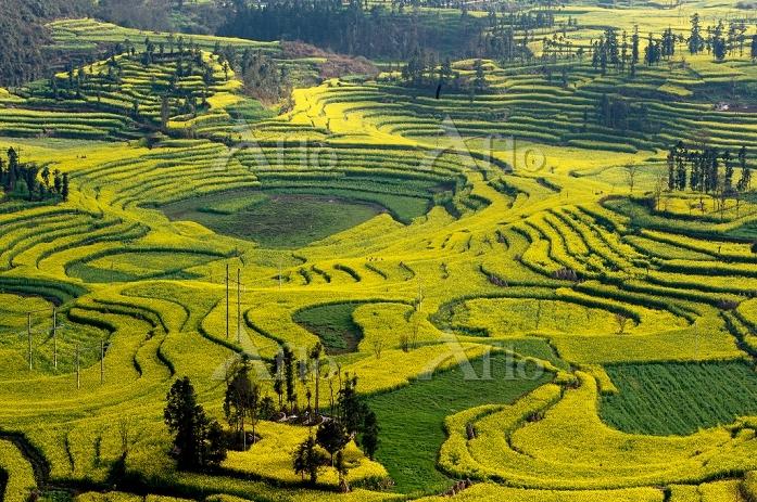 中国 田園