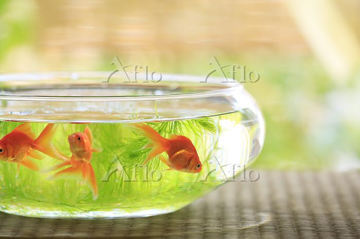 縁側に置かれた金魚鉢と3匹の金魚