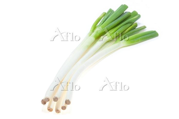 冬野菜 ネギ