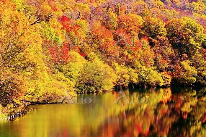 北海道 湖面に映える紅葉した林