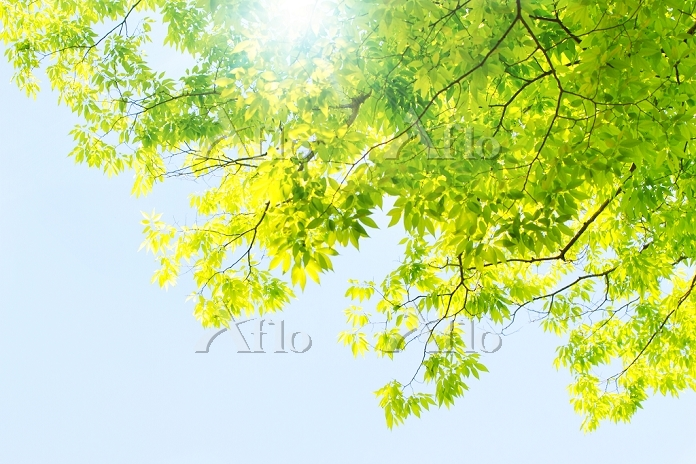新緑と空 千葉県